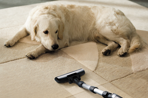 Pet Damage Clean Up Simi Valley CA